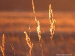 IMG_0905 Sunset on Plum Island